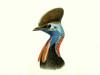 Casuariidae