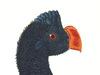 Cracidae