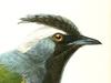 Paramythiidae