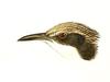 Rhabdornithidae