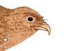 Steatornithidae